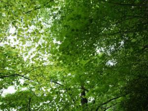 森の空気を味わう