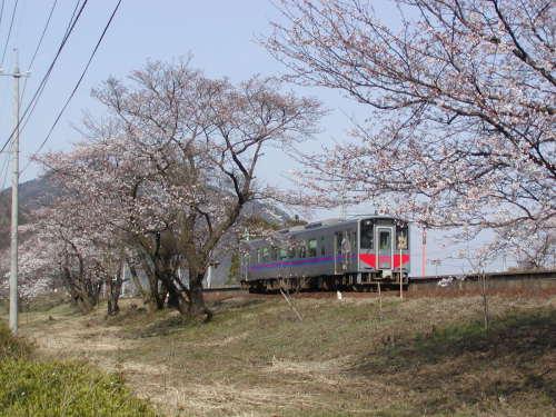 大岩駅の桜並木