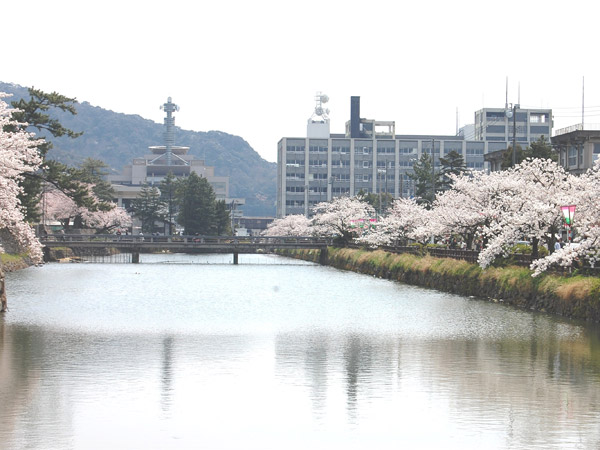 桜の名所久松公園