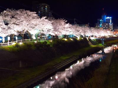 袋川桜並木
