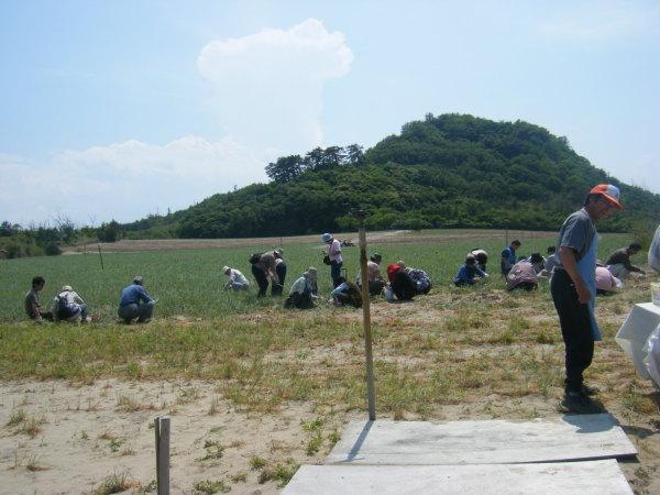 鳥取砂丘らっきょう収穫体験