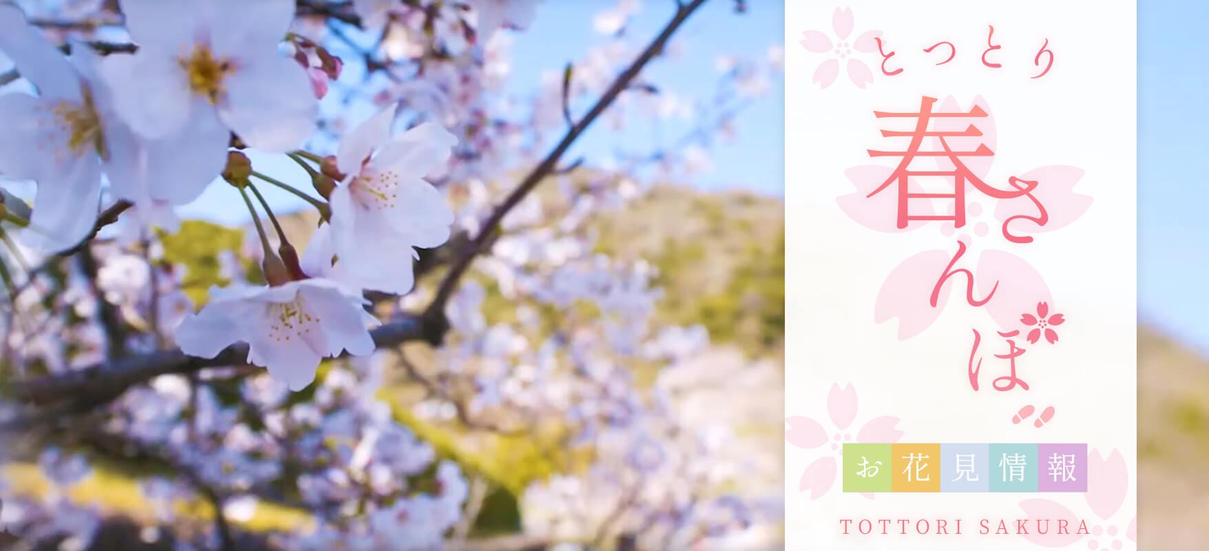 メインイメージ とっとり桜お花見特集