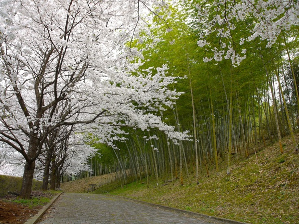 船岡竹林公園