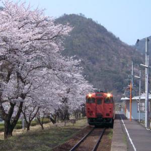 岩美・大岩駅の桜