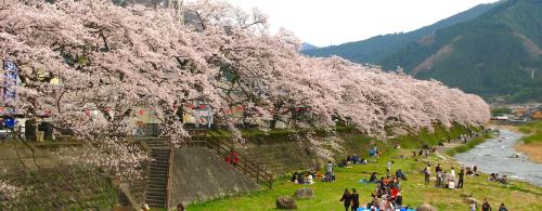 サムネイル_桜まつり・春まつり