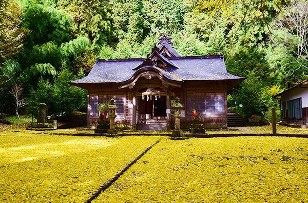 大石見神社(おおいわみじんじゃ)オハツキタイコイチョウ