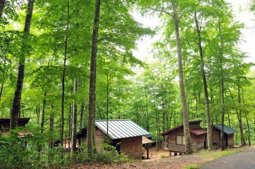 ブナ林での自然体験、キャンプ